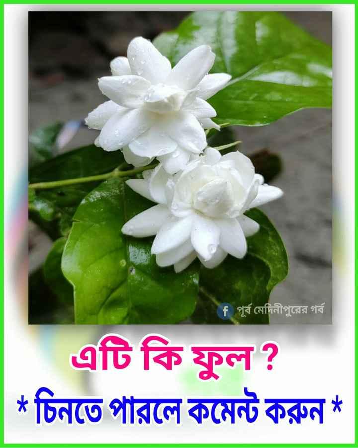 🙌শুভকামনা - # পূর্ব মেদিনীপুরের গর্ব এটি কি ফুল ? * চিনতে পারলে কমেন্ট করুন * - ShareChat