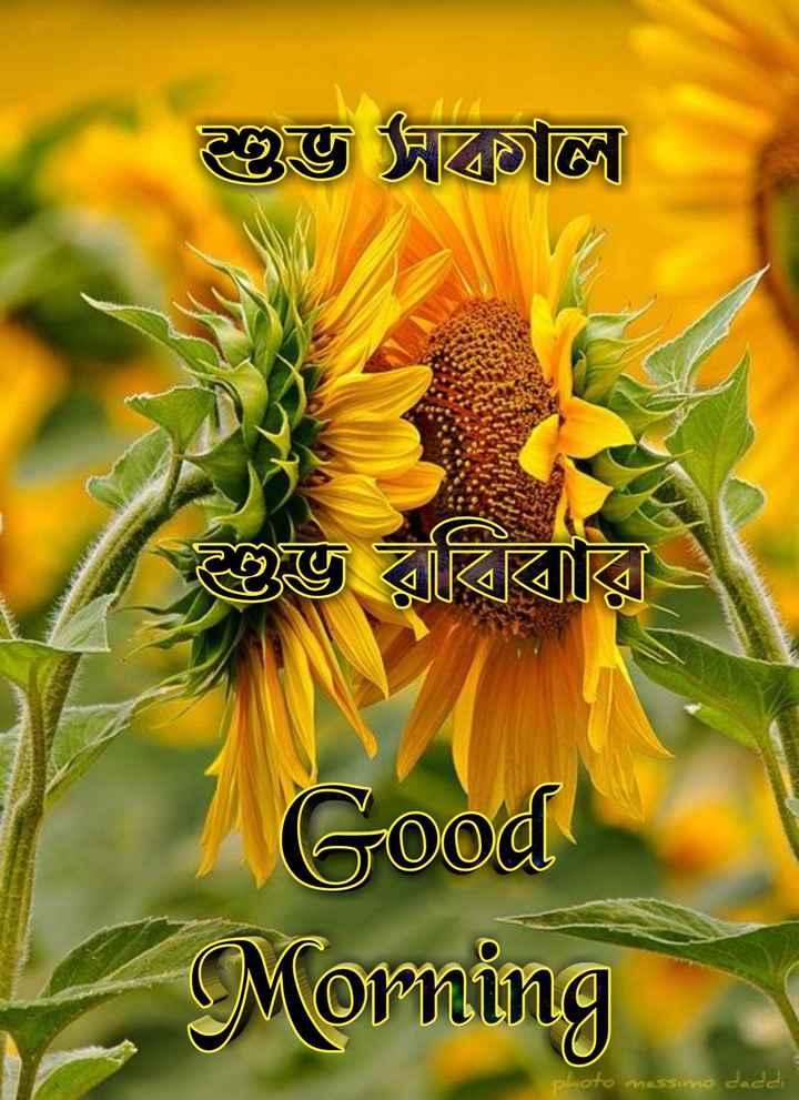 🙌শুভকামনা - শুভ দালাল শুভ রবিবার Good Morning to massimo daddi - ShareChat