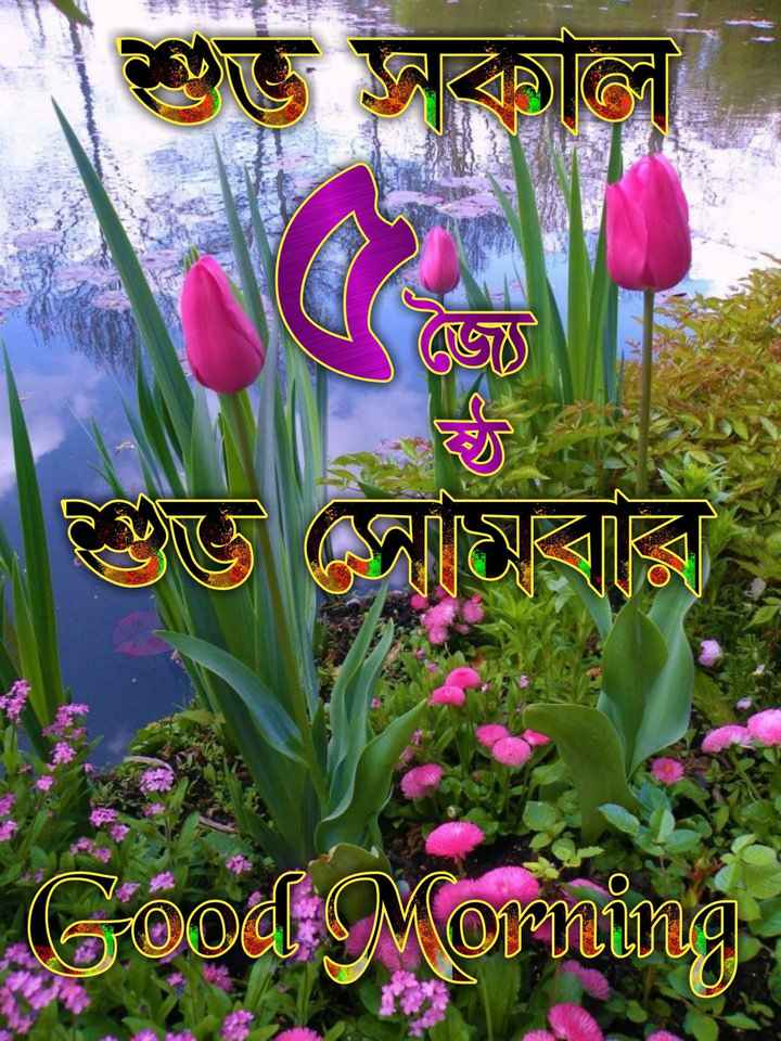 🙌শুভকামনা - Good Morning - ShareChat