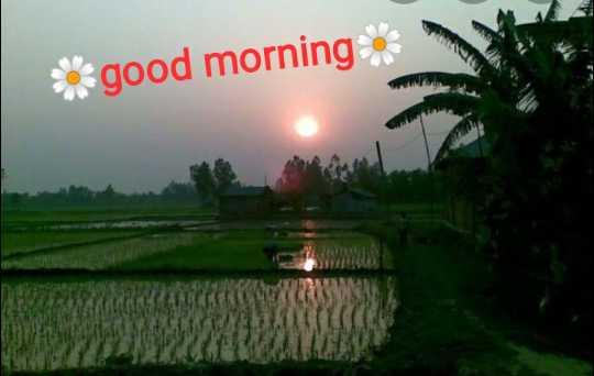 🙌শুভকামনা - * good morning - ShareChat