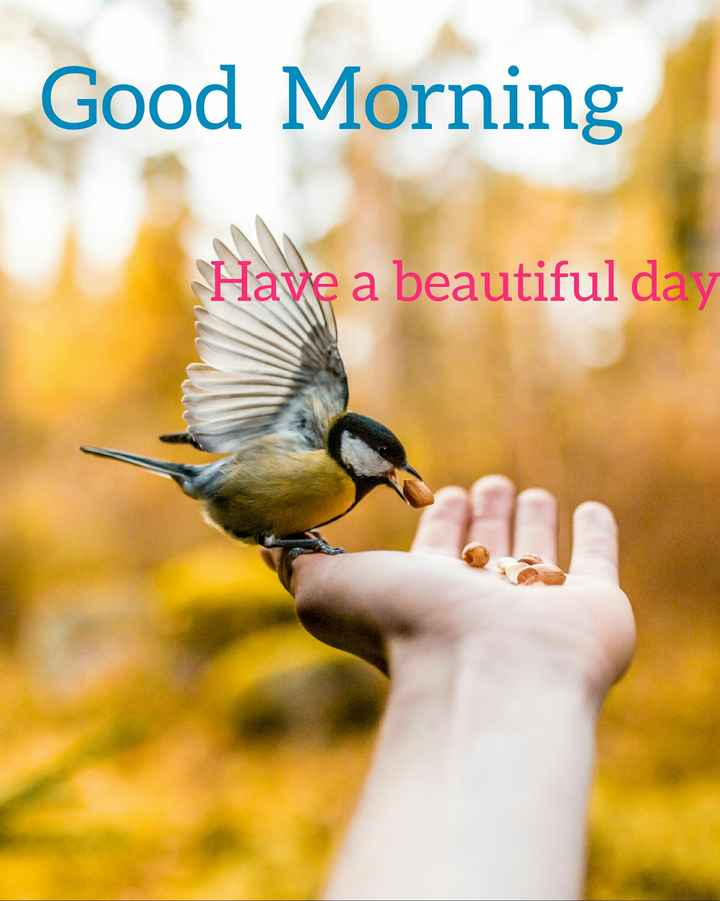 🙌শুভকামনা - Good Morning Have a beautiful day - ShareChat