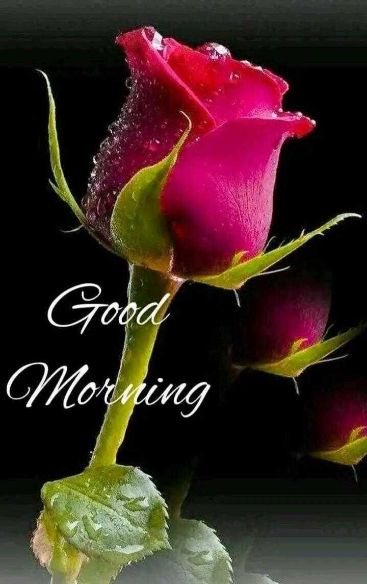 🙌শুভকামনা - . Good Morning - ShareChat
