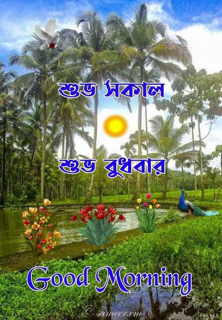 🙌শুভকামনা - শুভ সকাল । শুভ বুধবার Good Morning - ShareChat