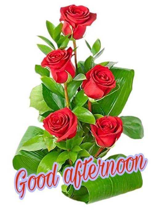 🌝শুভ দুপুর - Good afternoon - ShareChat
