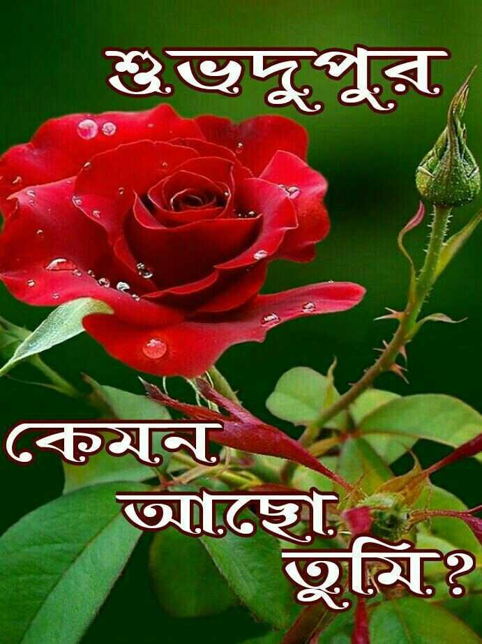 🌝শুভ দুপুর -   শুভদুপুর কেমন আছো , তুমি ? - ShareChat