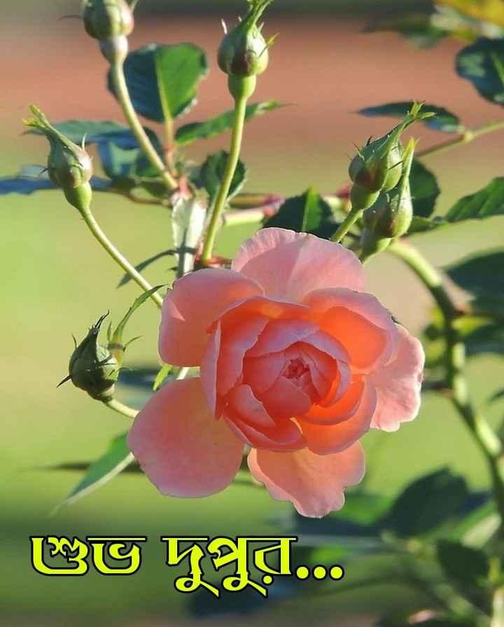 🌝শুভ দুপুর - ப் 8ெ - ShareChat