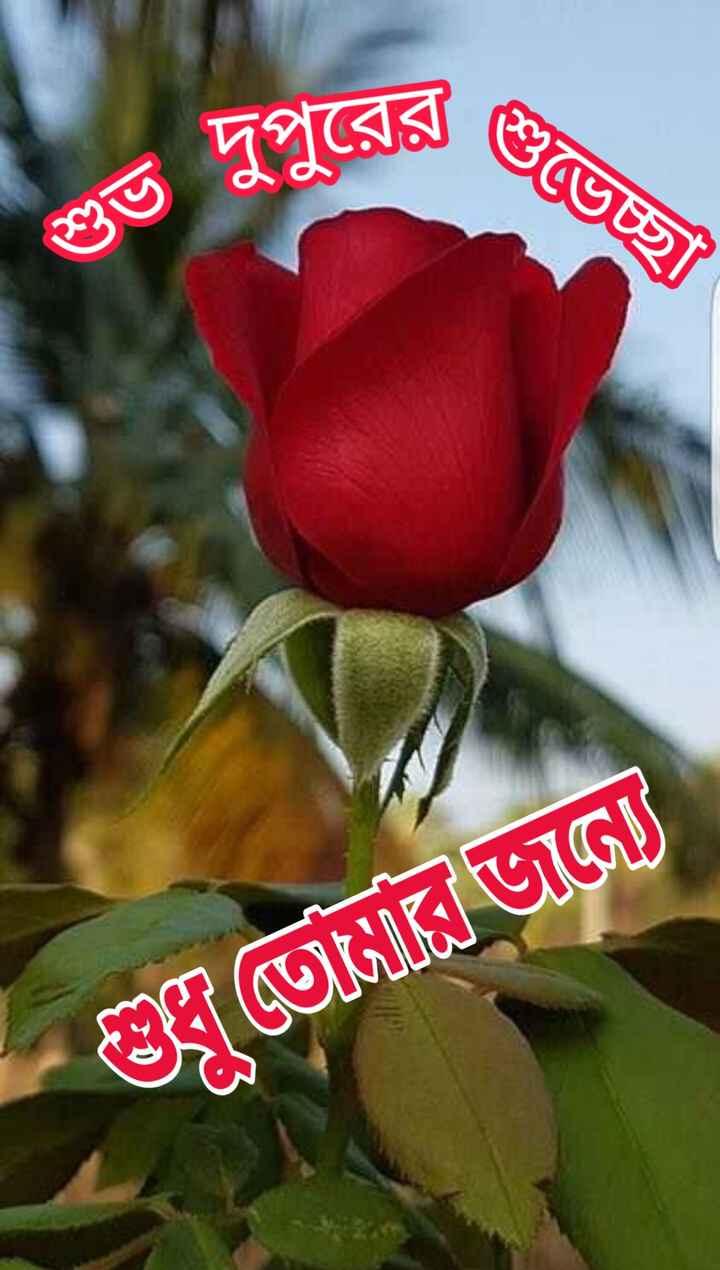 🌝শুভ দুপুর - শুভেচ্ছা । শুভ দুপুরের হে তােরে ভানে - ShareChat