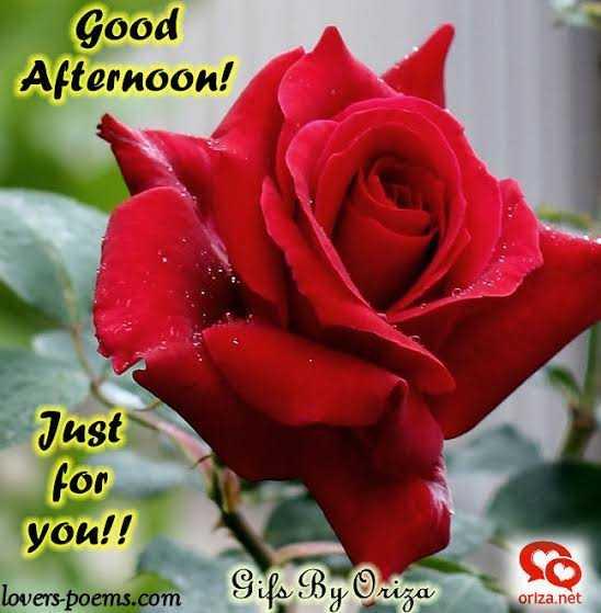 🌝শুভ দুপুর - Good Afternoon ! Just for you ! ! lovers - poems . com So Gifs By Oriza oriza . net - ShareChat