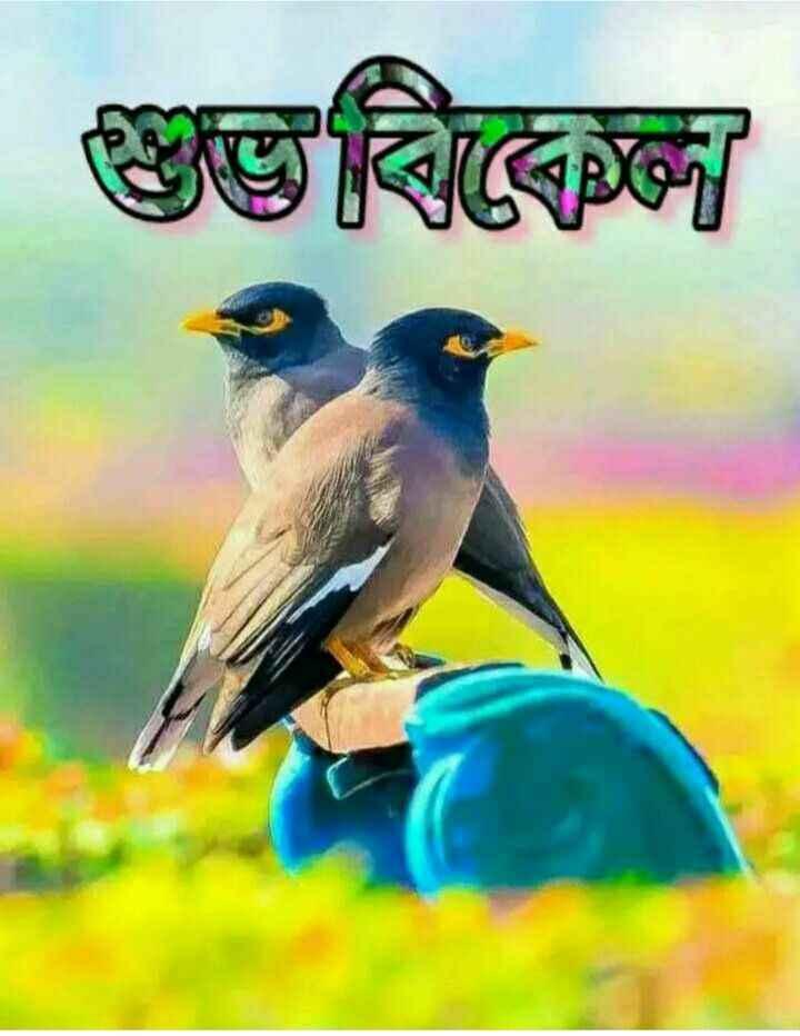🌕শুভ বিকেল - | শুভৰিীৰে - ShareChat
