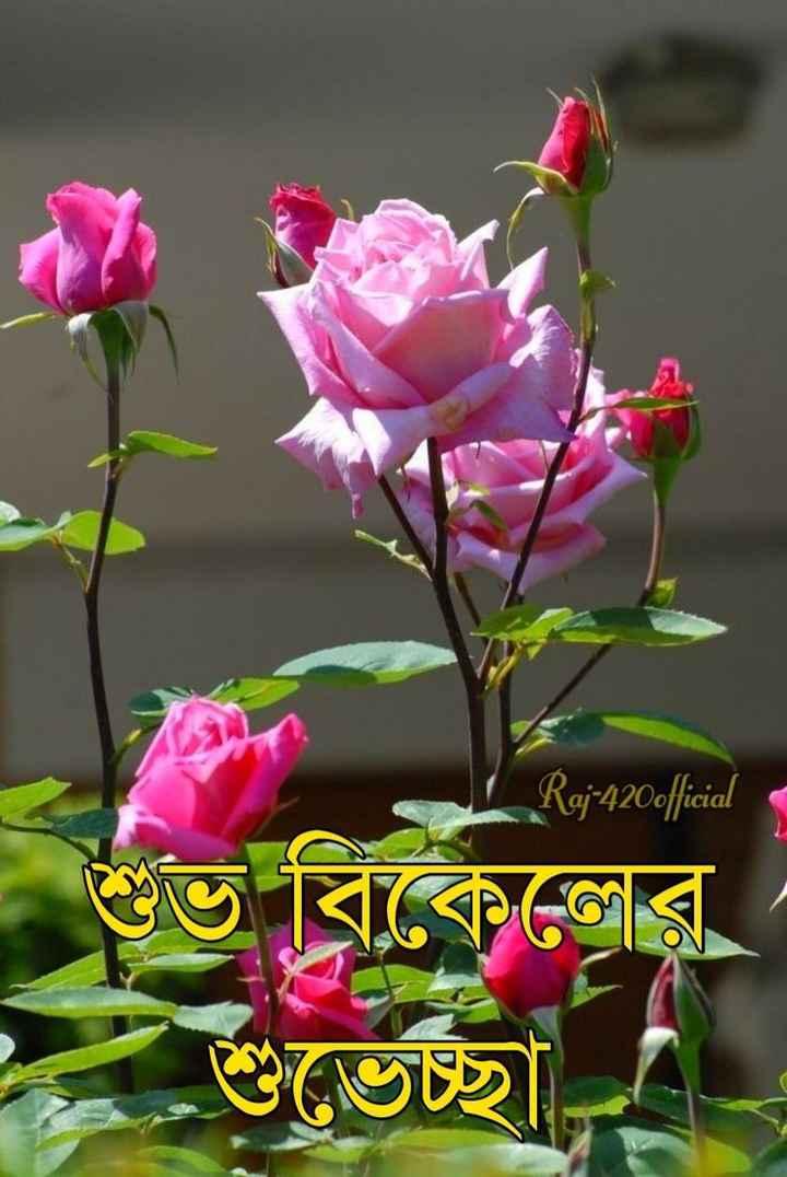 🌕শুভ বিকেল - Raj - 420official অবিকেলের শুভেচ্ছা - ShareChat