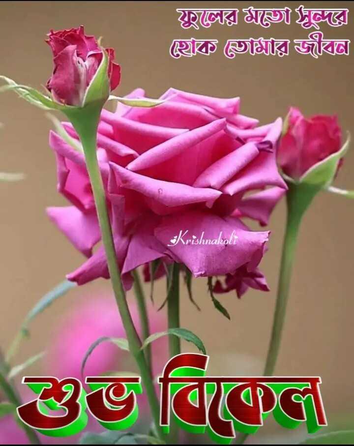 🌕শুভ বিকেল - ফুলের ফ্রঙ্গী জ্ঞ । ৫হাক মি জীবন্ত Krishnakoli শুভ বিকেল - ShareChat