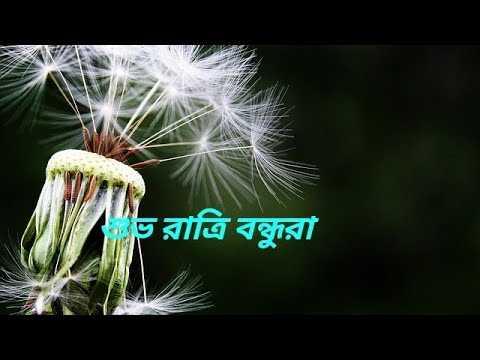 🌑শুভ রাত্রি - ভরাত্রি বন্ধুরা - ShareChat