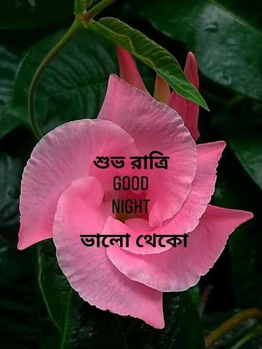 🌑শুভ রাত্রি - শুভ রাত্রি GOOD NIGHT ভালাে থেকো - ShareChat