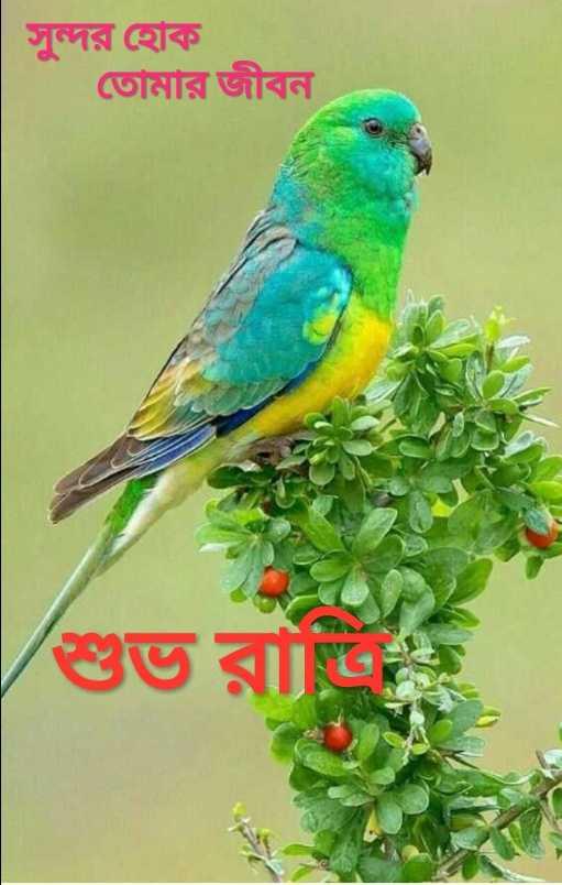 🌑শুভ রাত্রি - সুন্দর হােক তােমার জীবন - ShareChat