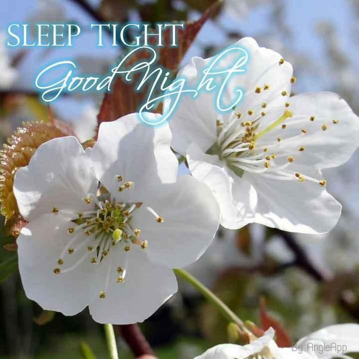 🌑শুভ রাত্রি - SLEEP TIGHT Good night ? A DA By Angle App - ShareChat