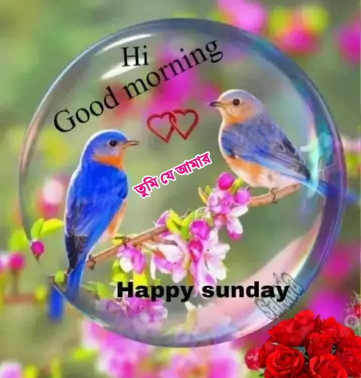 🌻🌼🌷শুভ সকাল।🌷🌼🌻 - Hi Good morning তুমিওযআমার Happy sunday - ShareChat