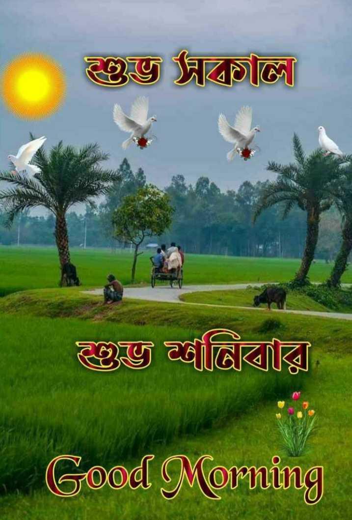 🌻শুভ সকাল 🌻 - শুভ সকাল । শুভ গ্রীবায় । Good Morning - ShareChat