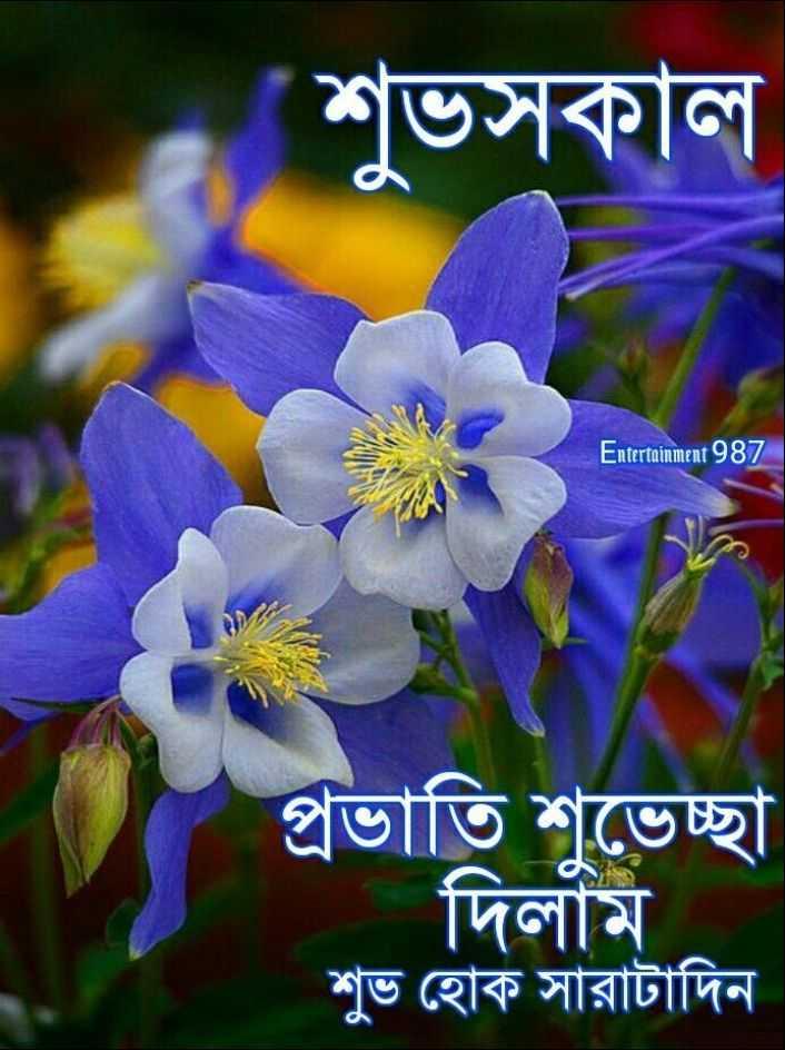 🌻শুভ সকাল 🌻 - শুভসকাল Entertainment 987 প্রভাতি শুভেচ্ছা দিলাম | শুভ হােক সারাটাদিন N - ShareChat