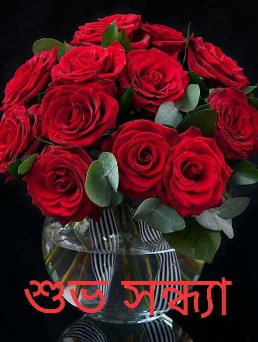 🌗শুভ সন্ধ্যা - শু সাবিন্যা - ShareChat