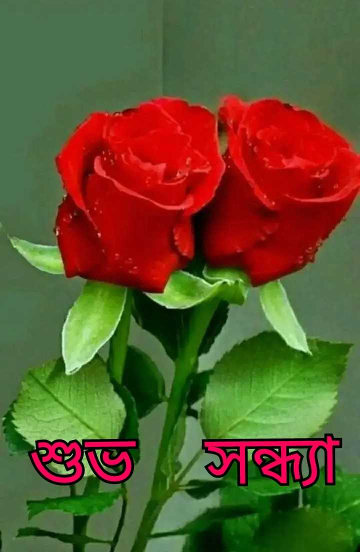 🌗শুভ সন্ধ্যা - শুভ সন্থী - ShareChat