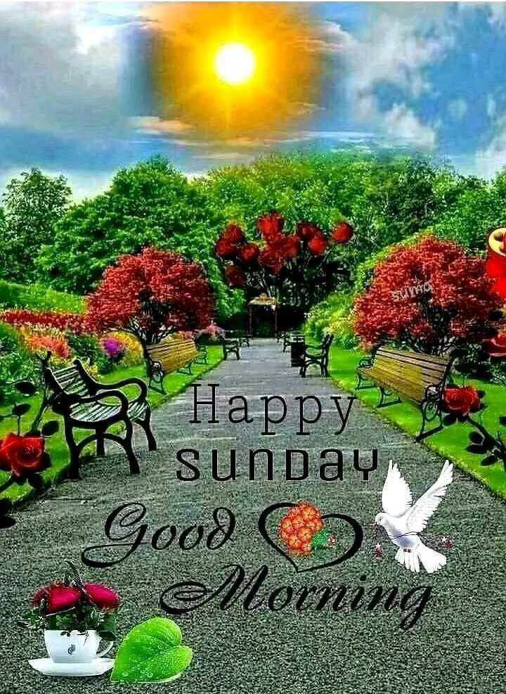 🥳 শুভেচ্ছা - 25 Happy sunday Good C . елоспіта В Х - ShareChat