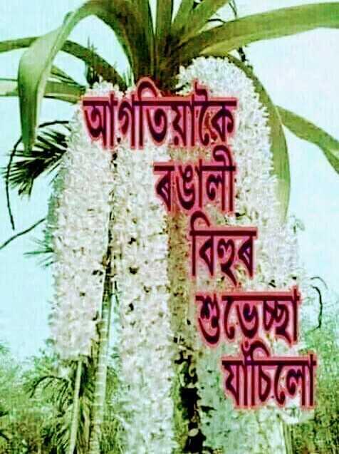 🥳 শুভেচ্ছা - আর্গতিয়াকৈ যাচিলো - ShareChat