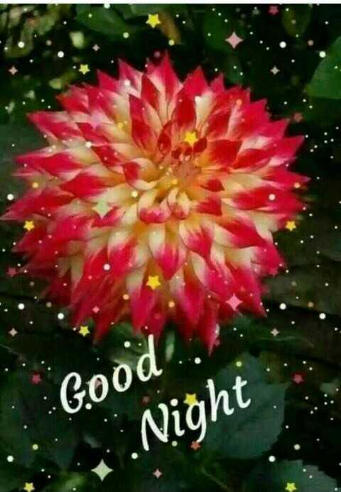 😴 শুভৰাত্ৰি - Good : : Night - ShareChat