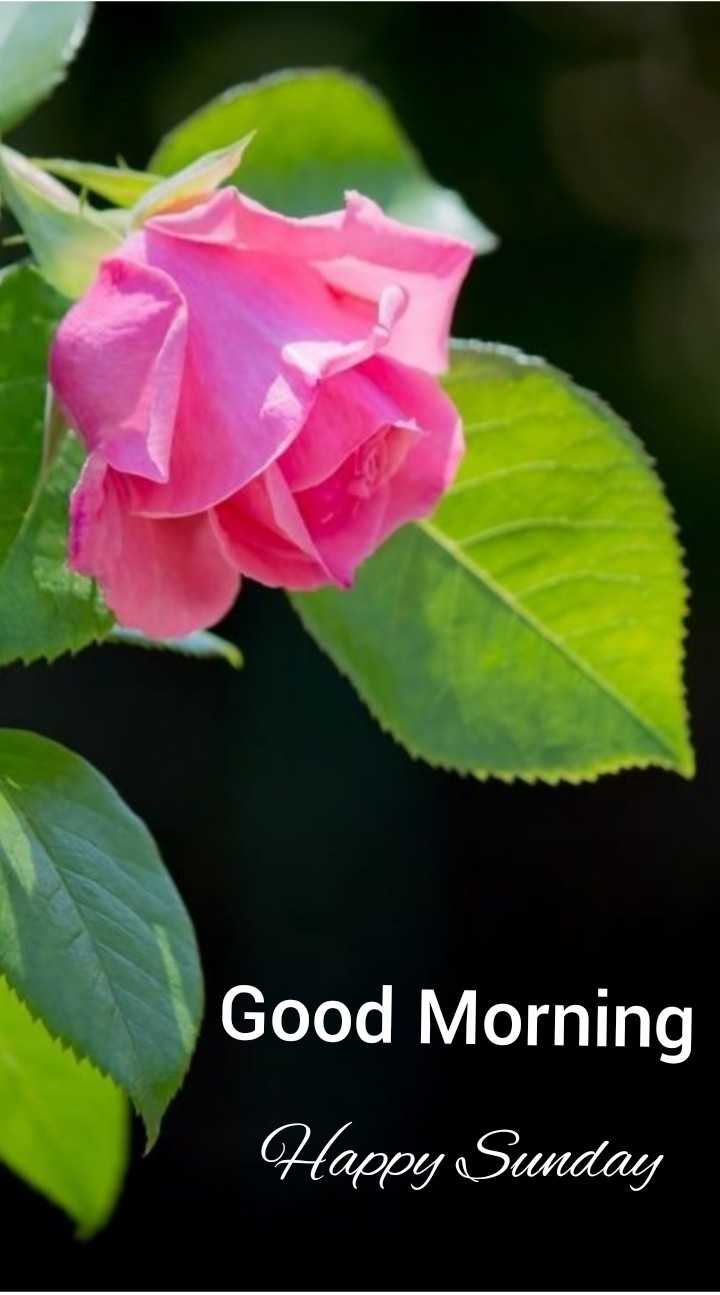 🌞সুপ্রভাত - Good Morning Happy Sunday - ShareChat