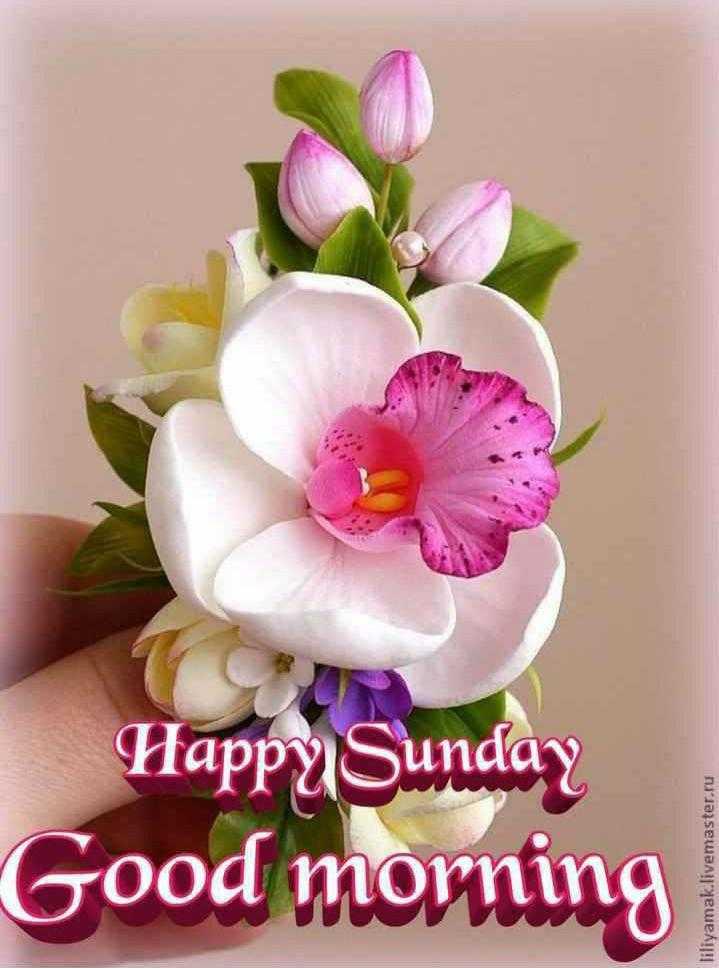 🌞সুপ্রভাত - Good morning Happy Sunday liliyamak . livemaster . ru - ShareChat