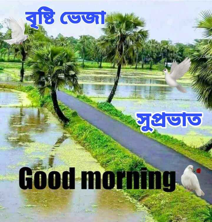🌞সুপ্রভাত - - বস্তি ভেজা সুপ্রভাত Good morning - ShareChat
