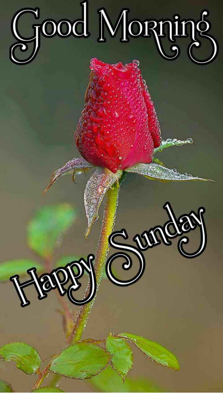 🌞সুপ্রভাত - Morning Happy Sunday - ShareChat