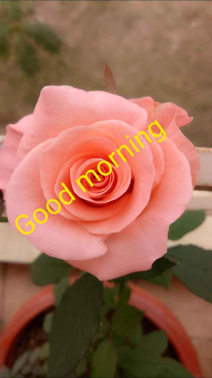 🌞সুপ্রভাত - Cood morning - ShareChat