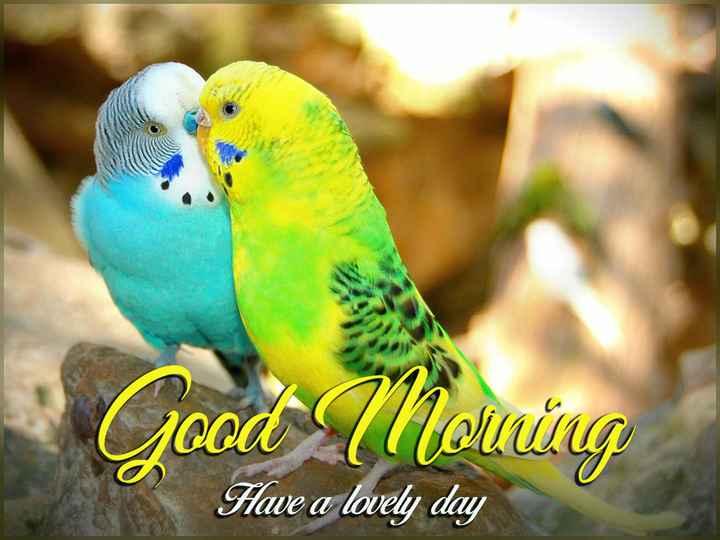 🌞সুপ্রভাত - Good ( Noucing Have a lovely day - ShareChat
