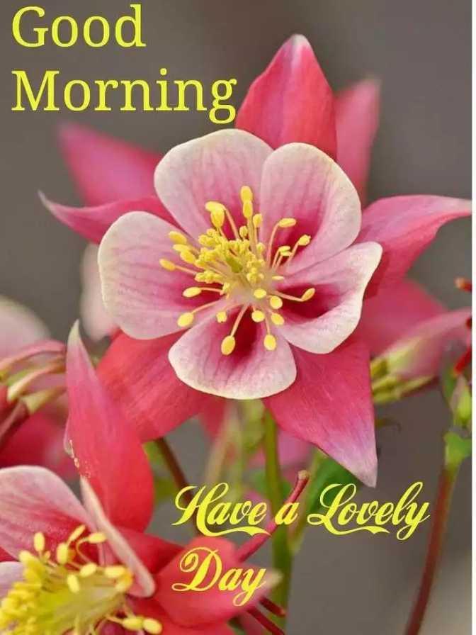 🌞সুপ্রভাত - Good Morning Have a Lovely Day - ShareChat