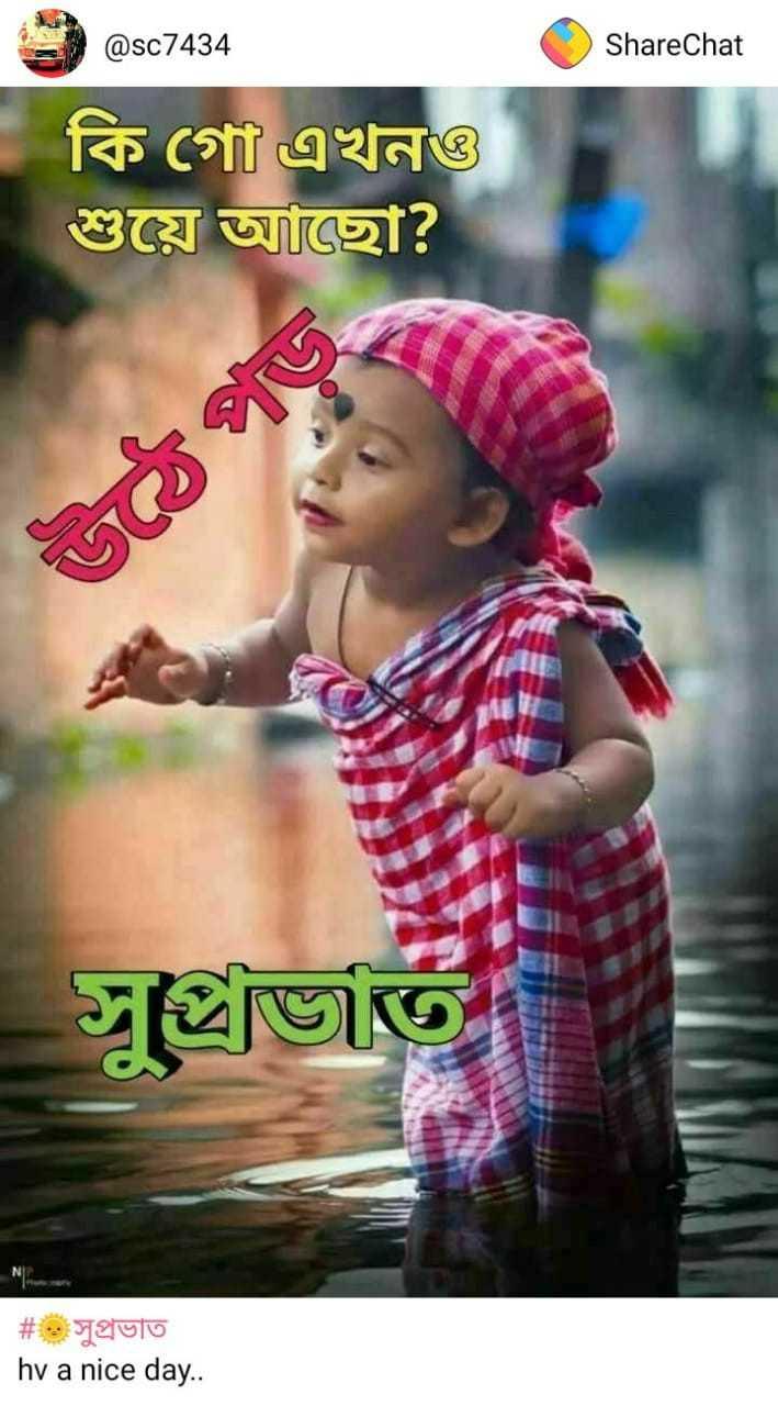 🌞সুপ্রভাত - ShareChat = @ sc7434 কি গাে এখনও * শুয়ে আছাে ? গত সুঙ্খিত | # . . . : সুপ্রভাত hv a nice day . . - ShareChat