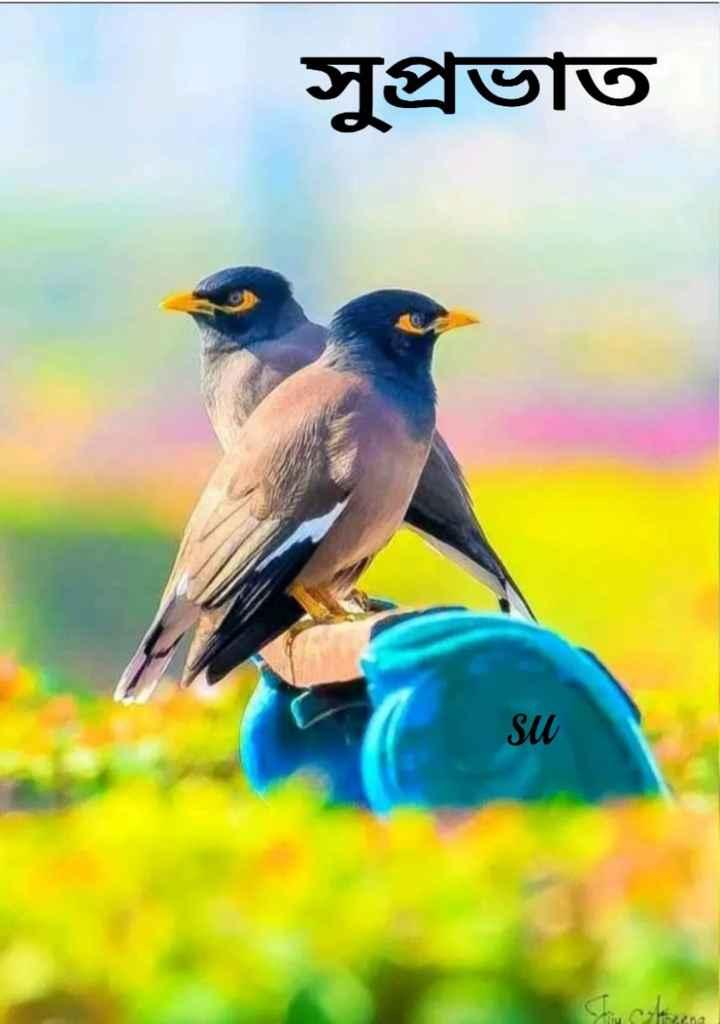 🌞সুপ্রভাত - সুপ্রভাত SU ৫ut৫৭ - ShareChat