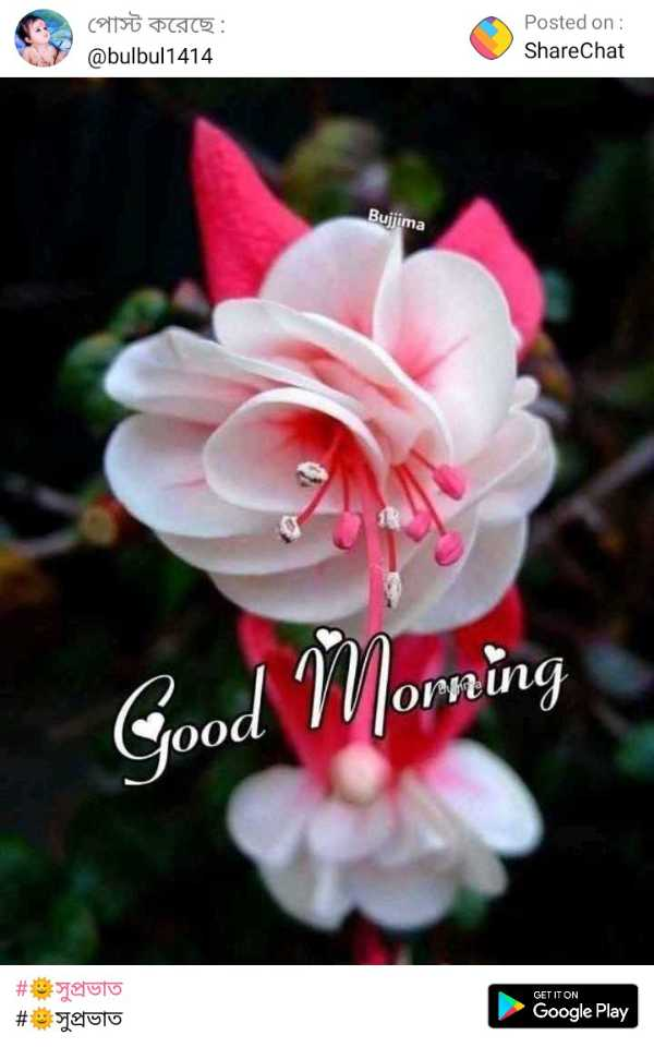 🌞সুপ্রভাত - পােস্ট করেছে : @ bulbul1414 Posted on : ShareChat Bujjima Good Morning # 19 সুপ্রভাত # সুপ্রভাত GET IT ON Google Play - ShareChat