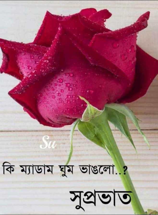 🌞সুপ্রভাত - কি ম্যাডাম ঘুম ভাঙলাে . . ? সুপ্রভাত - ShareChat