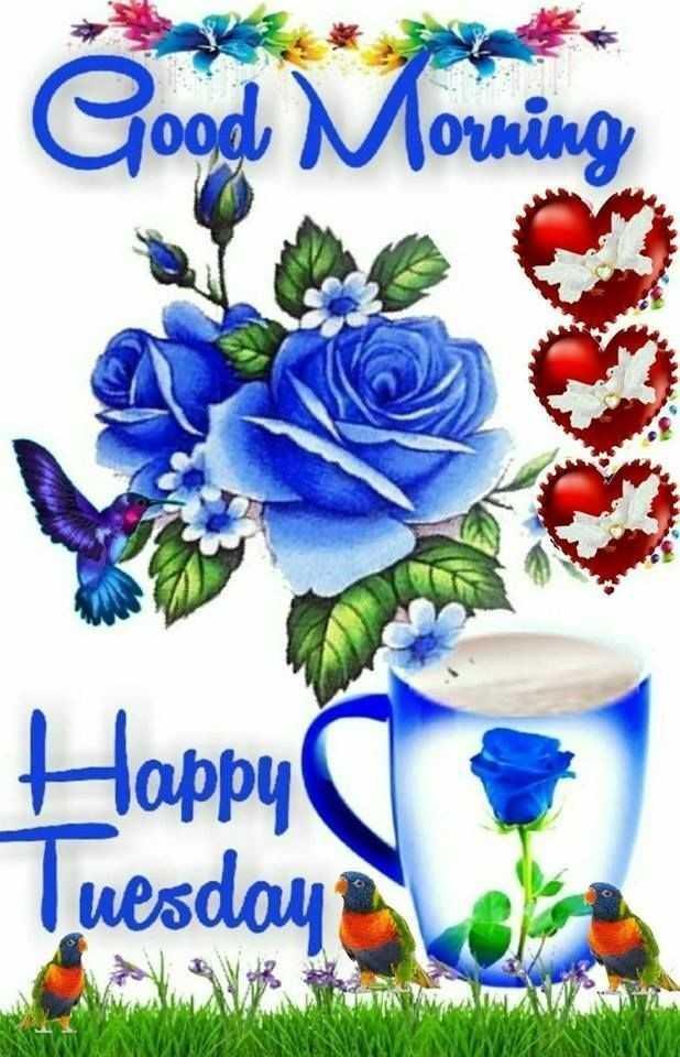 🌞সুপ্রভাত - Good Morning Happy Tuesday - ShareChat