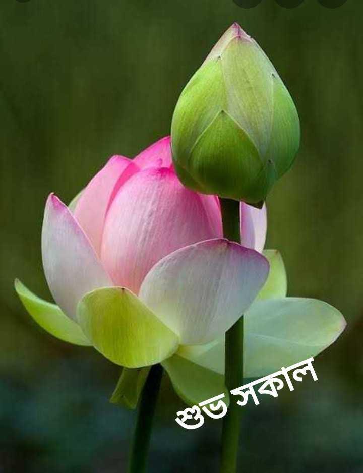 🌞সুপ্রভাত - শুভ সকাল - ShareChat