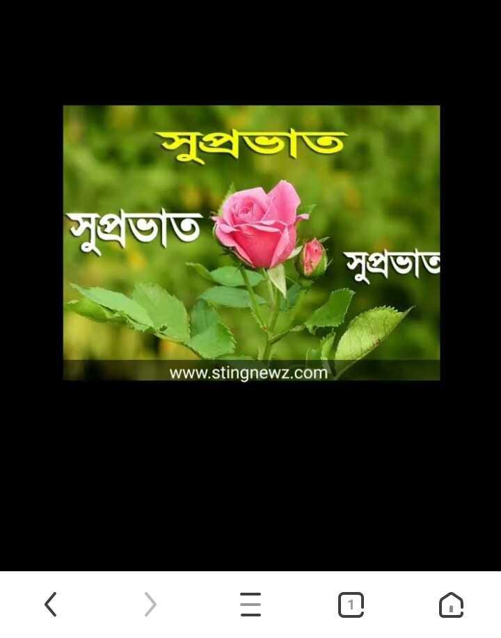 🌞সুপ্রভাত - সুপ্রভাত সুপ্রভাত । সুপ্রভাত www . stingnewz . com - ShareChat