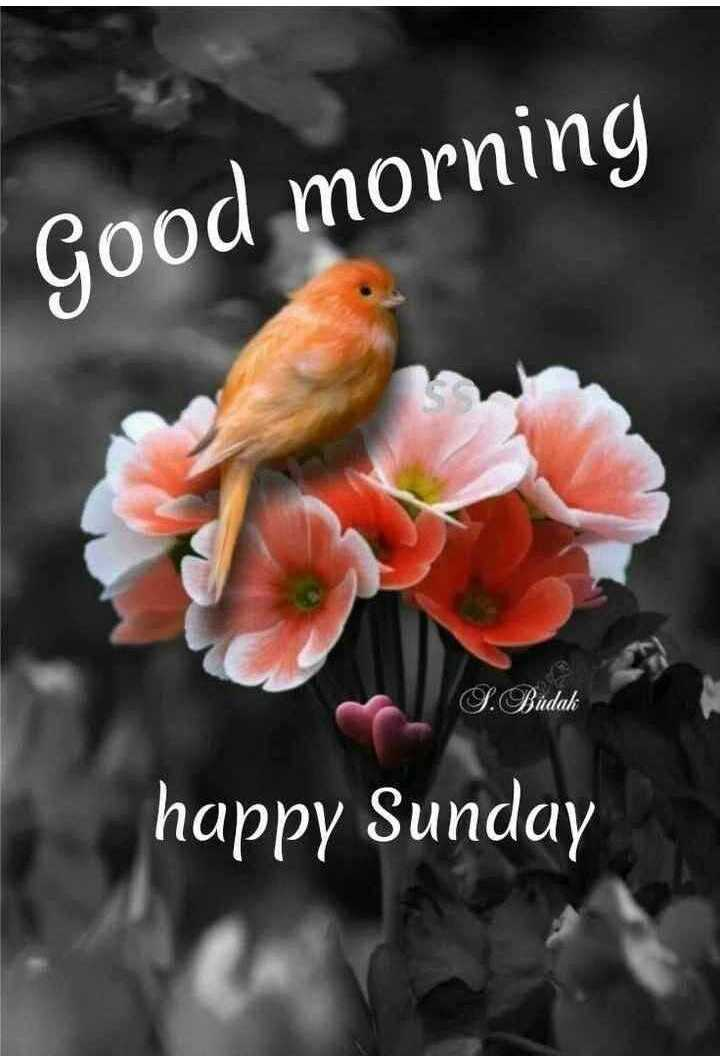 🌞সুপ্রভাত - Good morning S . Budak happy Sunday - ShareChat