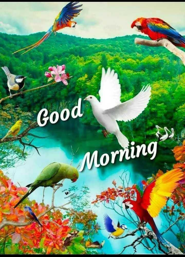 🌞সুপ্রভাত - * Good Morning - ShareChat