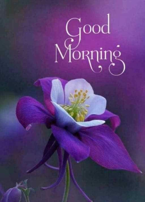 🌞সুপ্রভাত - Good Morning - ShareChat