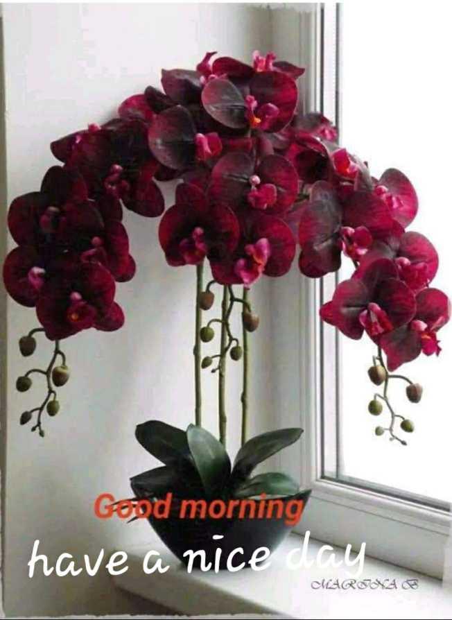 🌞সুপ্রভাত - Good morning have a nice day MARINA B - ShareChat