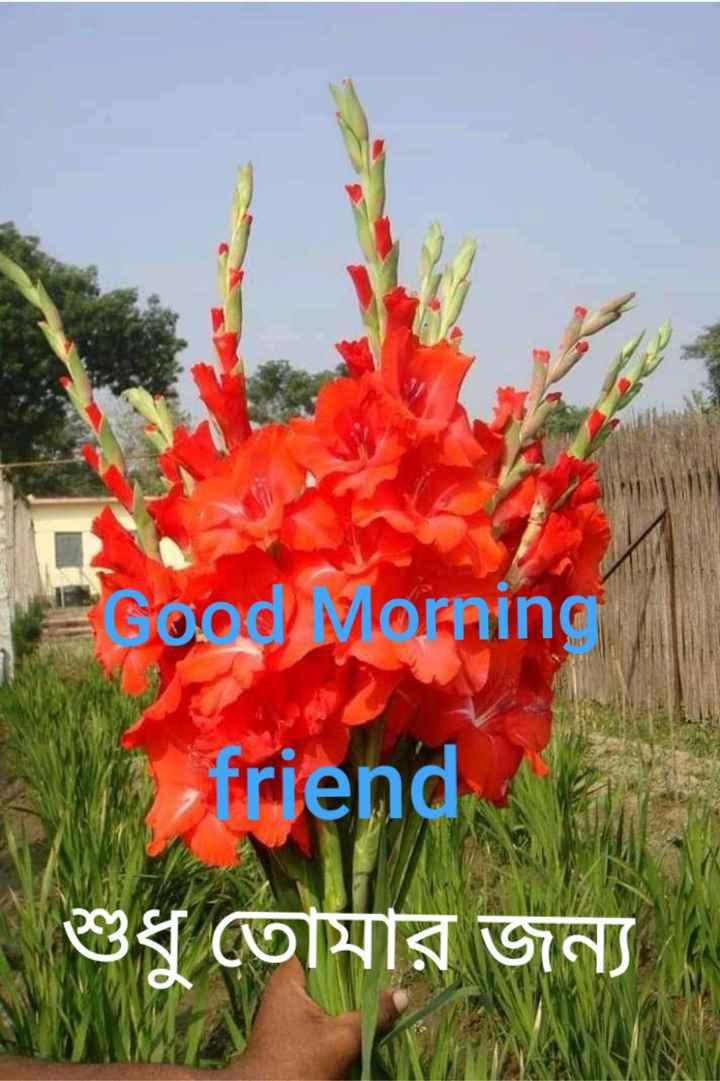 🌞সুপ্রভাত - Good Morning A friend | শুধু তােমার জন্য । MS ) - ShareChat