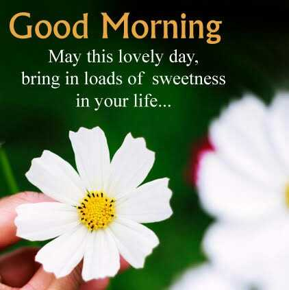 🌞সুপ্রভাত - Good Morning May this lovely day , bring in loads of sweetness in your life . . . - ShareChat