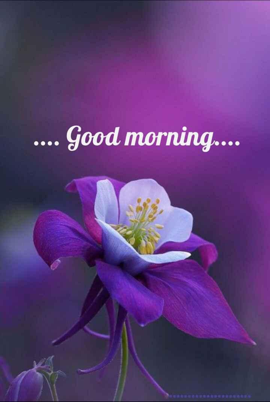 🌞সুপ্রভাত - . . . . Good morning . . . . - ShareChat