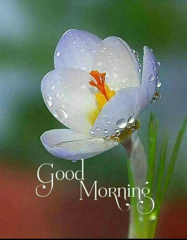 ★সুপ্রভাত★ - Good Morning - ShareChat
