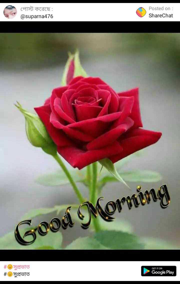 সু প্রভাত - পােস্ট করেছে : @ suparna476 Posted on : ShareChat Good Morning GET IT ON # espeter # # saluto Jeluto Google Play Google Play - ShareChat